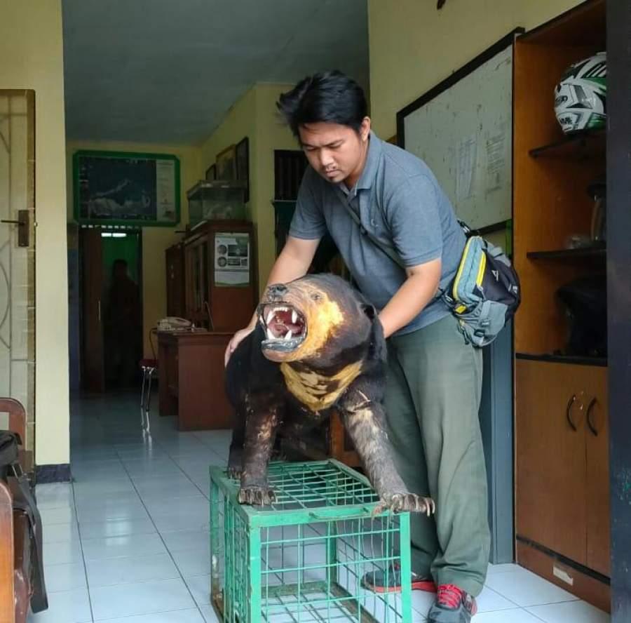 BKSDA Banten Mengamankan Seekor Beruang Madu Milik Warga Cilegon Banten