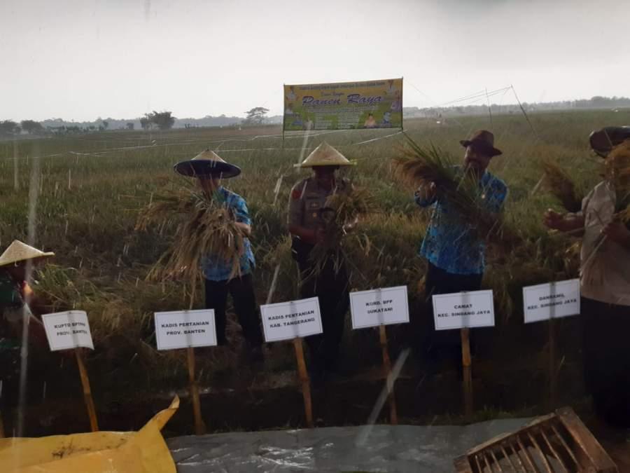 Hasil Pertanian Padi Di Desa Badak Anom Diapresiasi Pemerintah