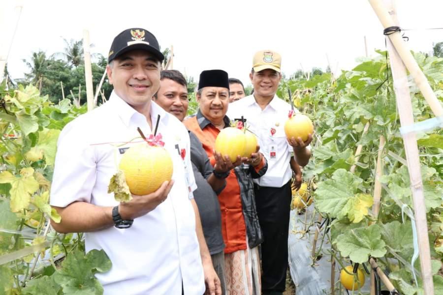 Zaki Panen Jagung dan Melon Di Teluknaga