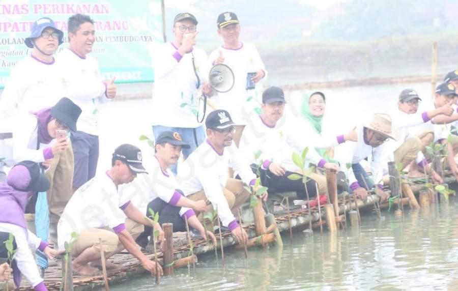 Sistem Wanamina Mulai Dirintis di Tambak Ikan Ketapang