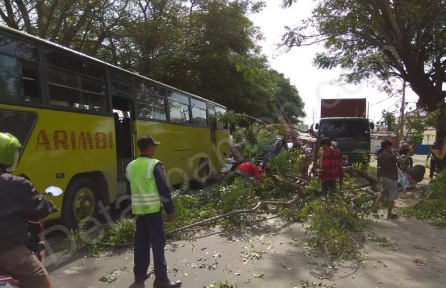 Tersangkut Kontainer, Pohon Tumbang